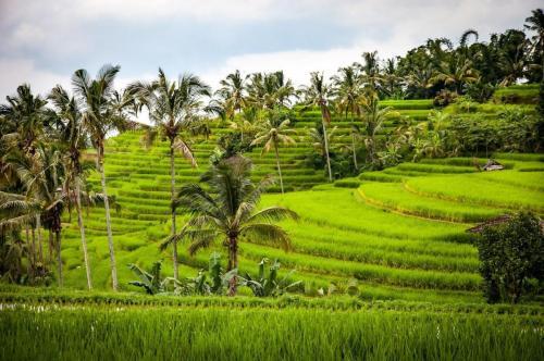 Bali honeymoon activities