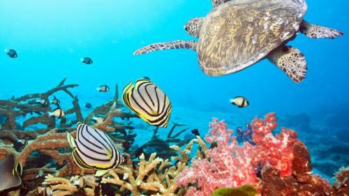 turtle sea ocean underwater swim 52415 1920x1080