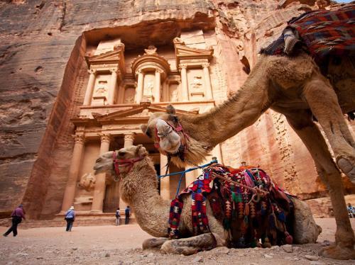 camels-petra-jordan 67981 990x742