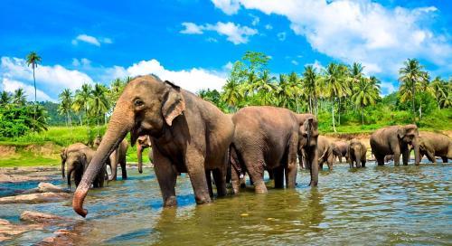 shri-lanka-slony