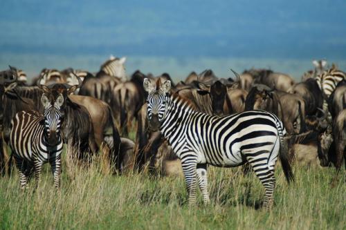 1.The Serengeti, Northern Tanzania