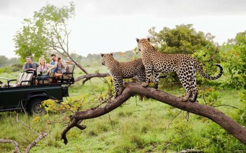 kruger-safari-ALISTAFRICAMIDEAST0817