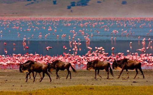 tanzania-flamingos-at-ngorongoro-crater