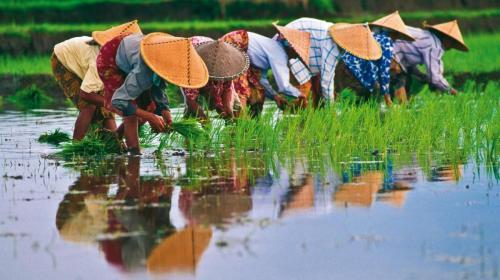 drinkpreneur rice-paddies-vietnam-192533-0